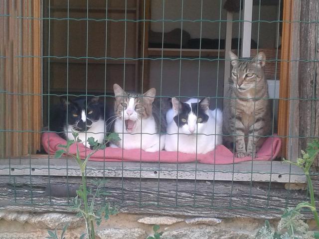 Die Katzenvilla