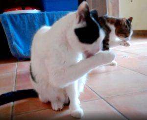 Fips und Einstein üben eine Choreografie 03.01.19
