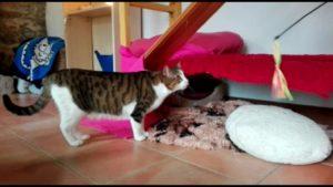 Spielspass in der Katzenvilla 10.04.20