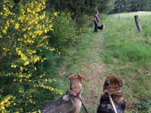 Unsere Hunde lieben die Blumenwiese, 27.04.20