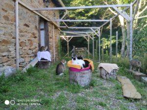 Sommerfrische in der Katzenvilla 14.07.20