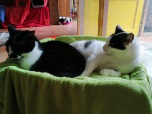 Chillen in der Katzenvilla 20.11.20