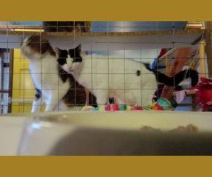 Festessen in der Katzenvilla 26.12.20